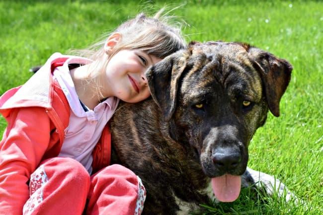 Little girl hugging her mastiff dog