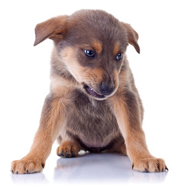Puppy Aggression And Dominance Your Questions Answered