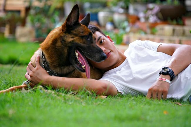 Belgian Malinois wearing training collar lying on the grass with young owner