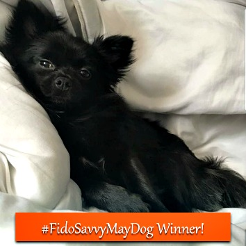 Fidosavvy.com Instagram Puppy Photo contest winner