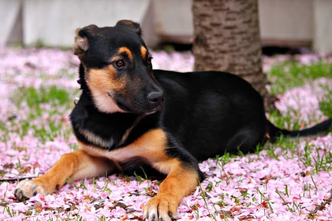 Mixed breed puppy surrounded by pink flowers