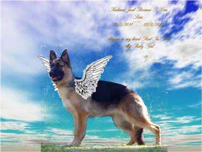 My Angel Lara