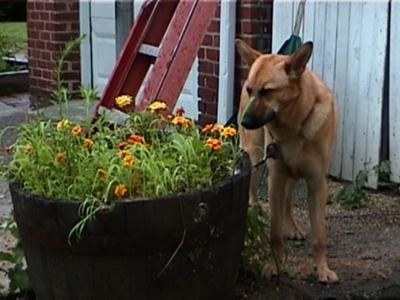Chloe smelling flowers