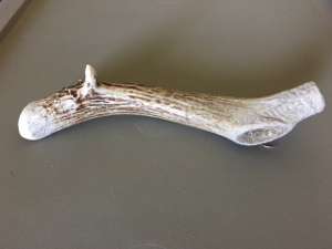 Natural antler for dogs, seen after being chewed for six months