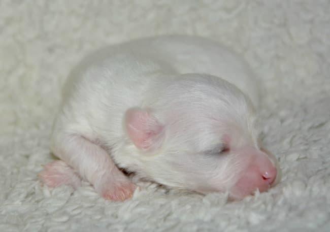 Newborn puppy on fleece pad