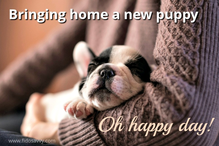 Bringing home a new puppy makes for a happy day