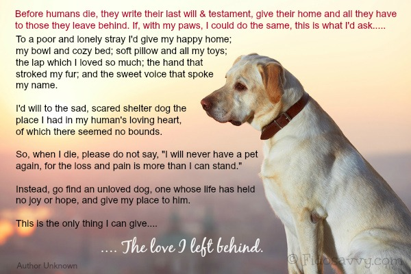 Dog Rainbow Bridge - Memorials For Much-Loved Pets