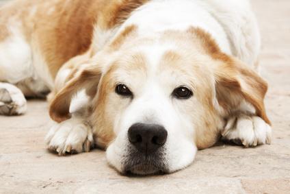 Dog lying on stone floor