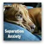 Click here to learn all about separation anxiety.