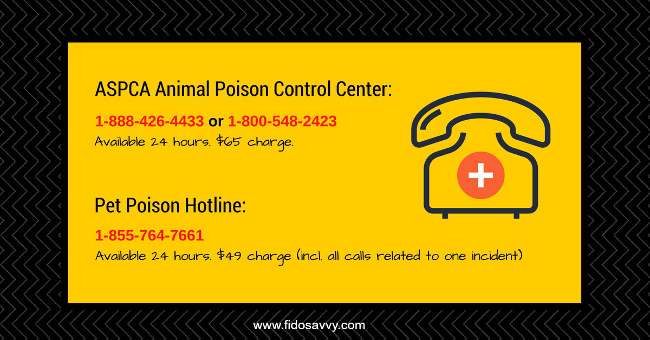 animal poison control numbers