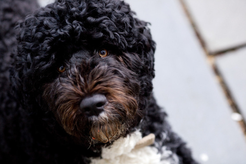 The Best Portuguese Dog Names
