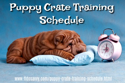 Shar Pei puppy with an alarm clock. Puppy crate training schedule.