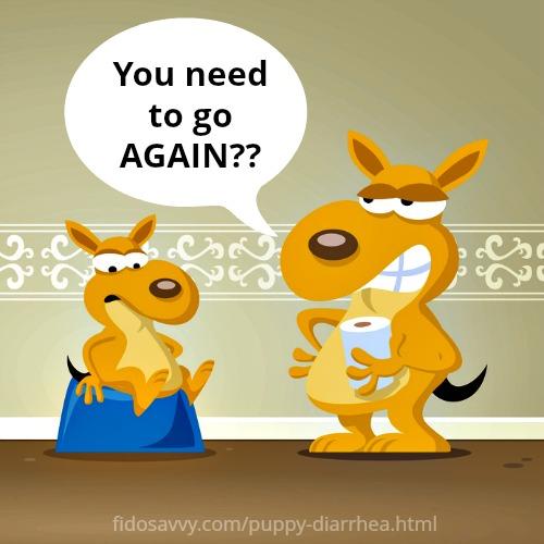 Puppy Diarrhea Causes Treatment Amp Prevention