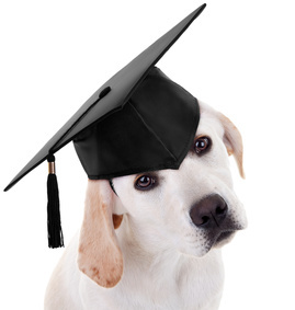 Puppy in graduation cap