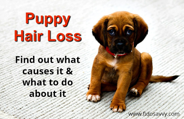 Guide to puppy hair loss