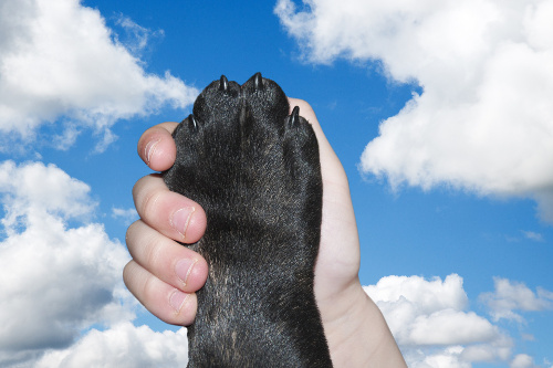 Puppys' paw being held in childs' hand