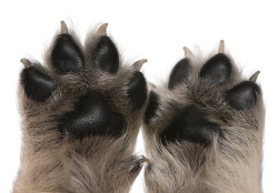 Little puppy paws and nails