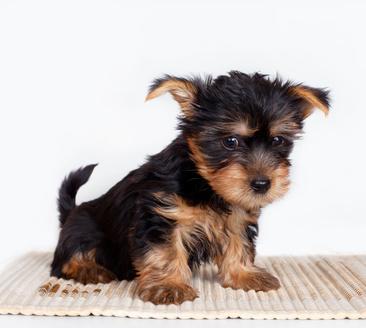 Best Puppy Pee Pads