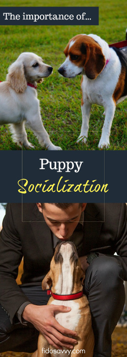 About the importance of puppy socialization