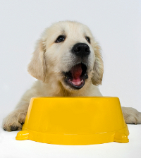puppy with dog food bowl
