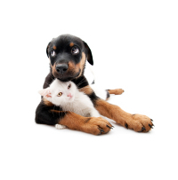 rottweiler puppy with kitte