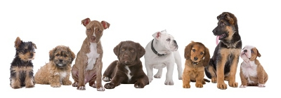 row of puppies of different breed