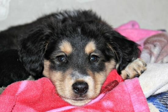 Sad puppy not feeling well