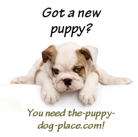 puppy care guide