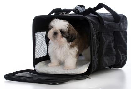 Shih Tzu in soft dog crate