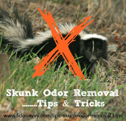 skunk odor removal tips