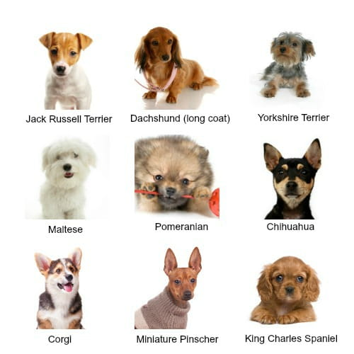 Photo collage of different types of small dogs