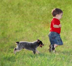 blue heeler pup and toddler