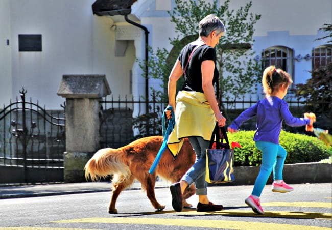 Woman and child walking a Golden Retriever in the sunshine