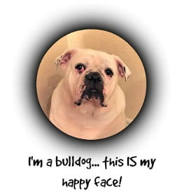 Bulldog face in circle