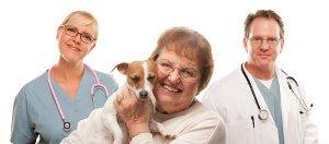 Dog Acting Sick Vomiting Won T Eat