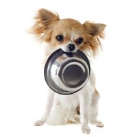 Puppy with empty food bowl