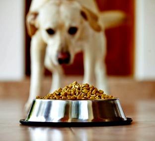 Choosing a nutritionally balanced dog food