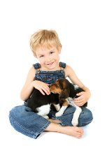 Small boy with Beagle puppies