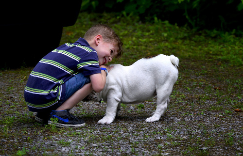 Best dog breeds for children. Boy with English Bulldog.