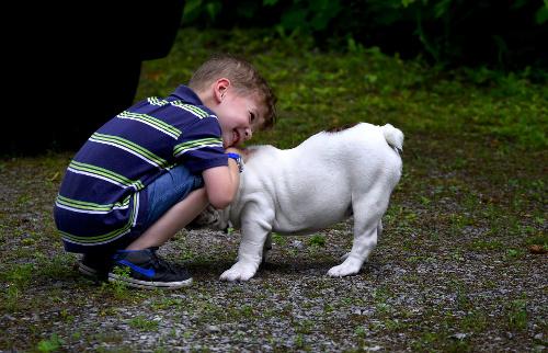 Best dog breeds for children. Boy with English Bulldog.