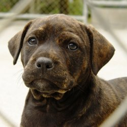 puppy waiting to be adopted