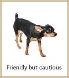 Friendly, cautious dog body language