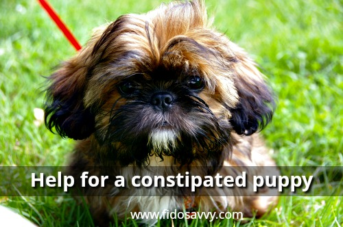 Help for a constipated puppy