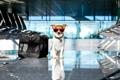 Dog friendly vacations airport terminal