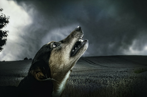 Dog scared of thunderstorm