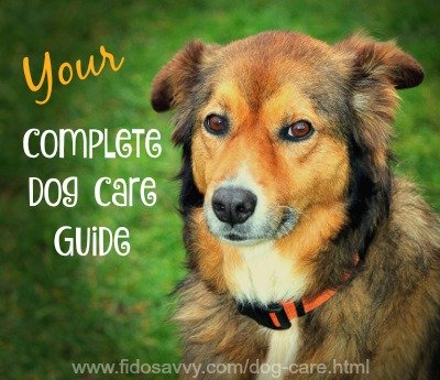 Complete dog care guide