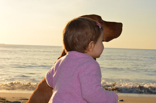 Toddler with dog on beach