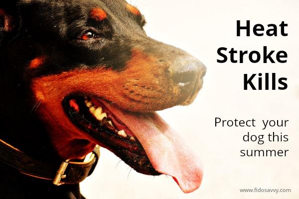 Dog heat stroke guide