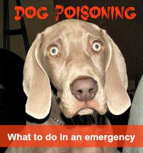 Accidental Poisoning In Dogs
