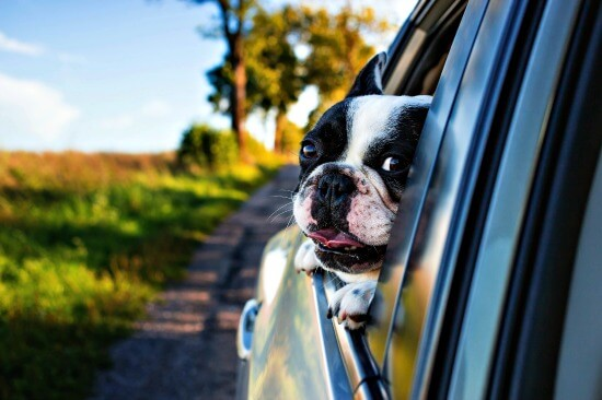 Dog travel resources guide